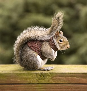 Squirrel_in_sweater_part_tr_1_1